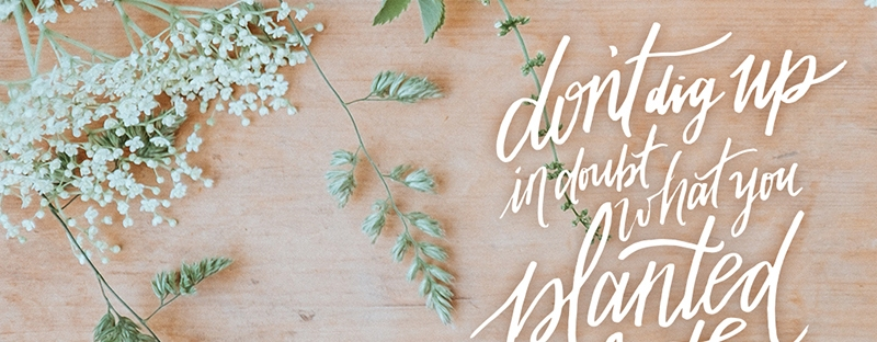 Don't Dig Up in Doubt {Free Download}